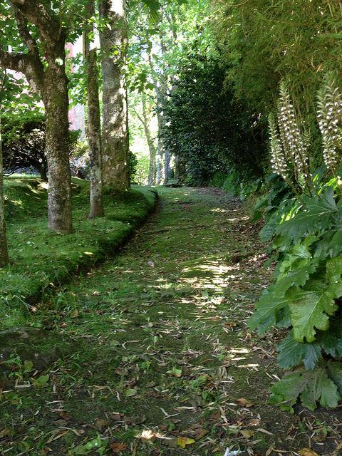 Zöld. Mindenhol. Parque Terra Nostra
