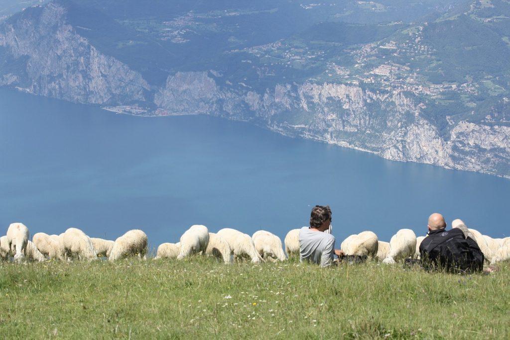 Garda-tó - Kilátás birkákkal