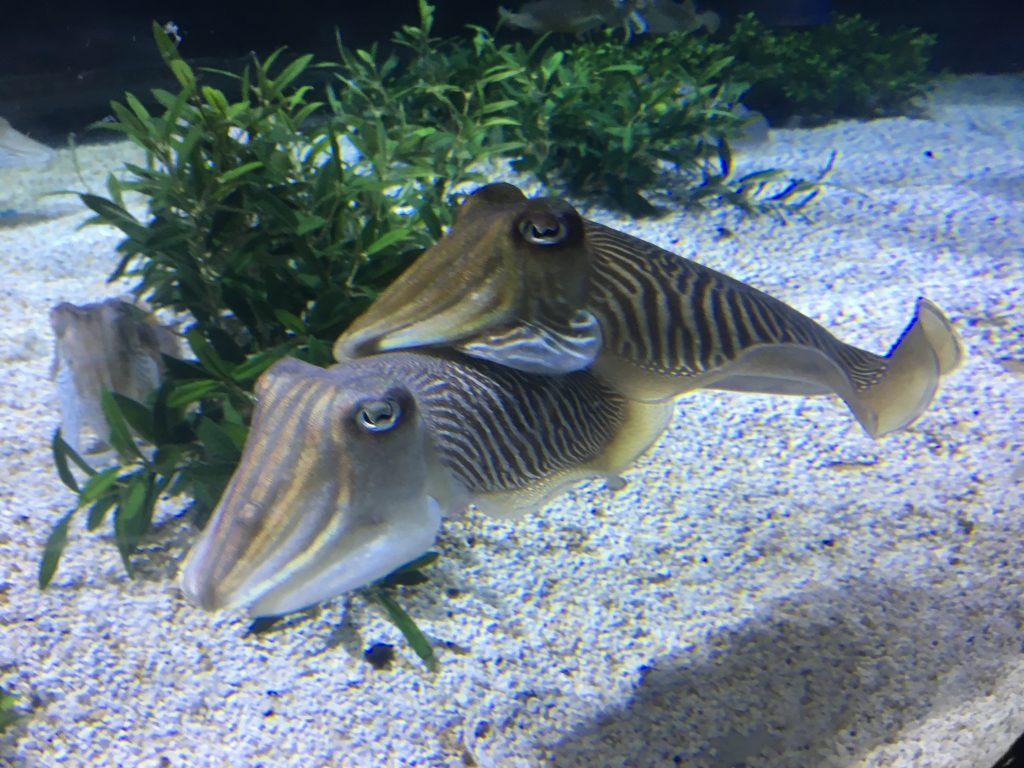 barcelonai akvárium