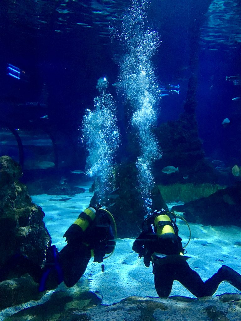 barcelonai akvárium buvarokkal