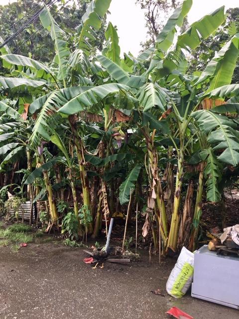 Guadeloupe élménybeszámoló - az út szélén kapirgál :)