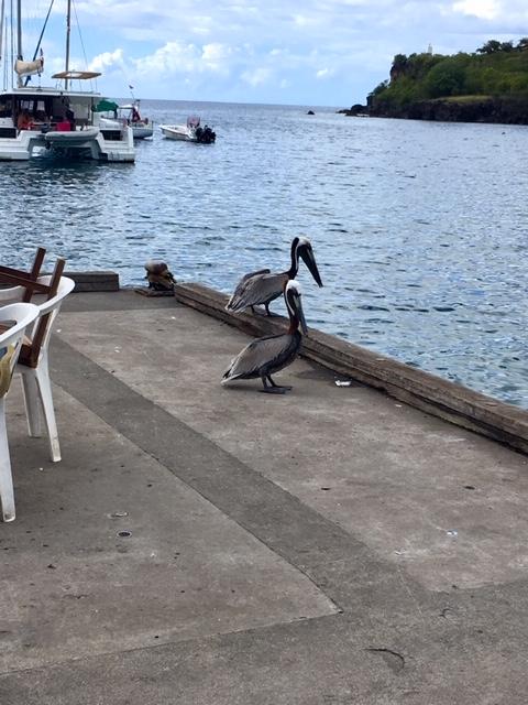 Potyaleső madarak :) Guadeloupe élménybeszámoló