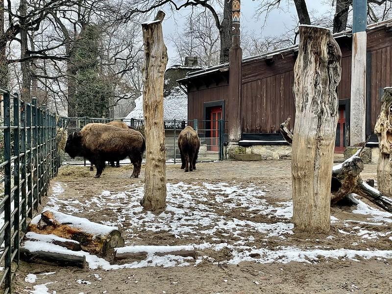 berlini állatkert