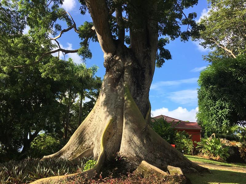 A világ egyik legszebb botanikus kertje